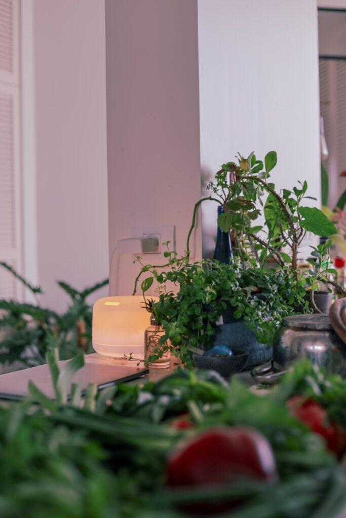 Plants Purifier